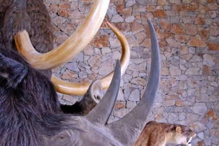 Musée de la préhistoire à Quinson © CG des Alpes de Haute Provence